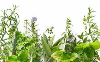 Способы использования мочегонных трав при отеках, цистите и других урологических заболеваниях