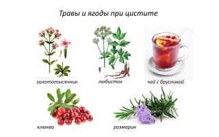 Применение трав при цистите – травяные сборы, фитопрепараты