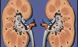 Причины и симптомы гломерулонефрита, диагностика и способы лечения недуга