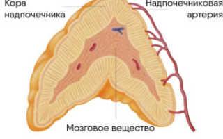 Как развивается дисфункция коры надпочечников, симптомы и способы лечения заболевания