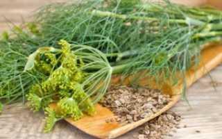 Применение семян укропа для лечения урологических и нефрологических заболеваний